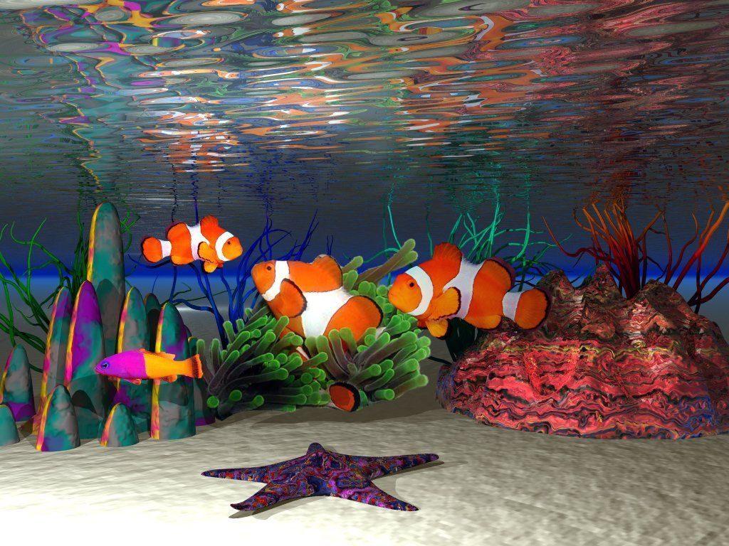 Peces payaso 1024x768 fondos de pantalla y wallpapers for Pintura para estanques de peces