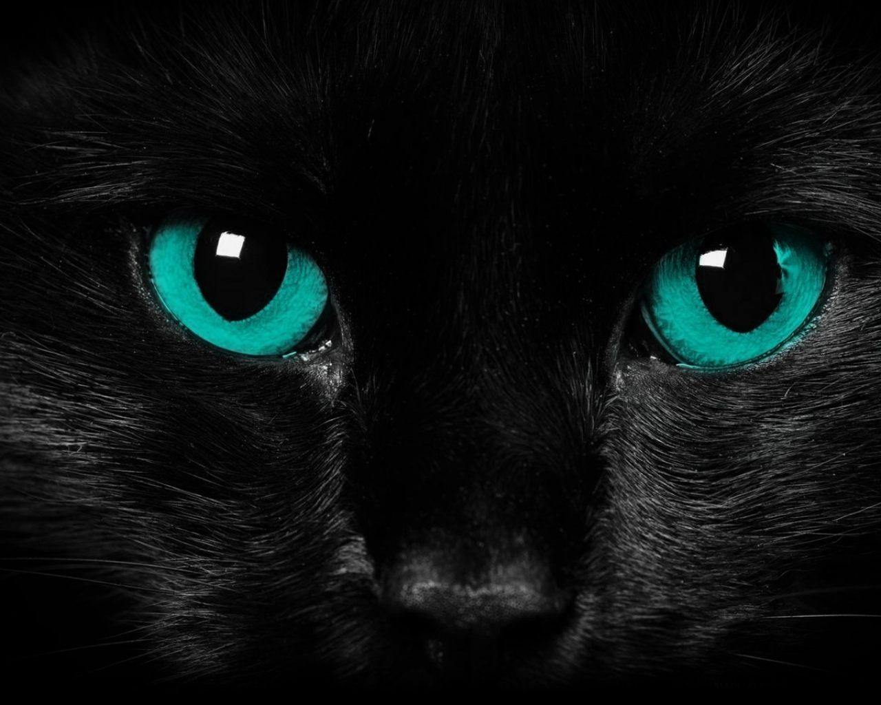 Black Cat With Pink Scary Eyes: 1280x1024 :: Fondos De Pantalla Y Wallpapers