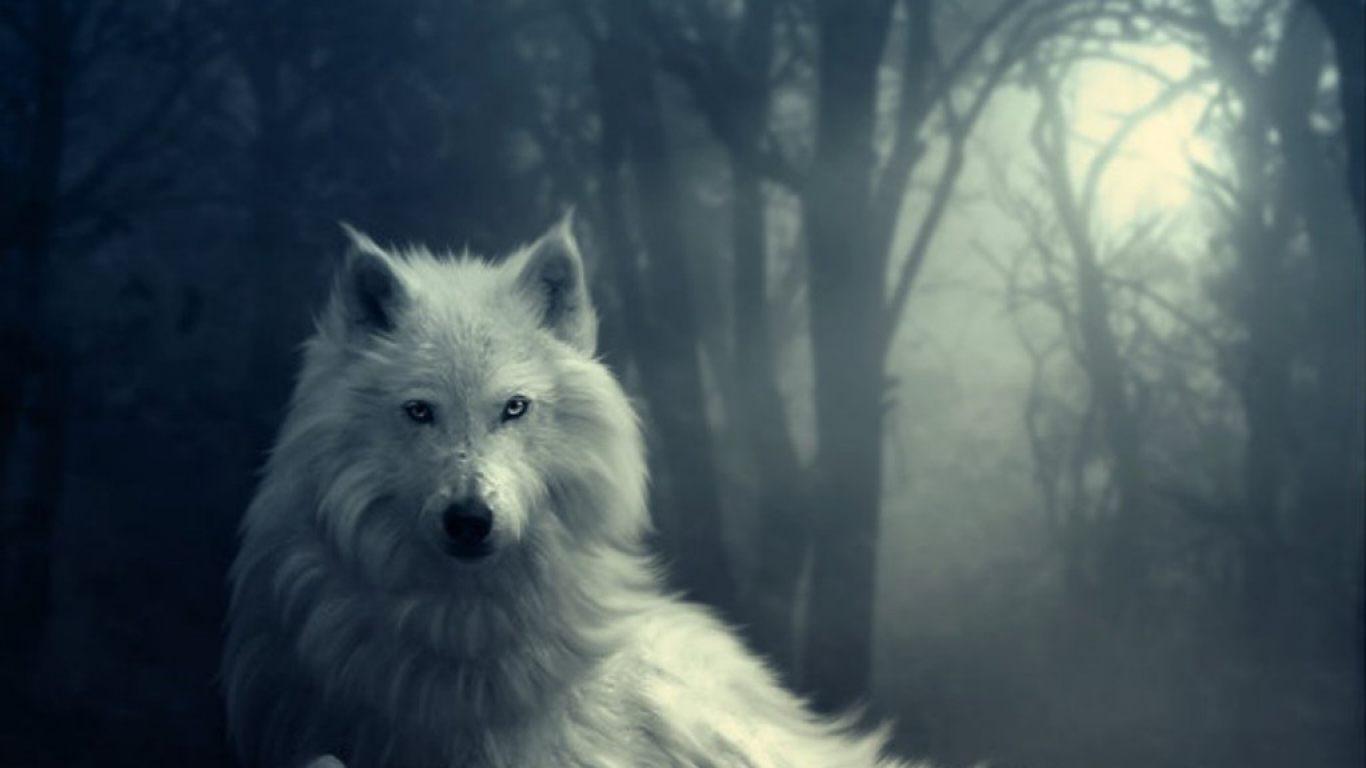Sexymaru...  Lobo-blanco-en-la-noche