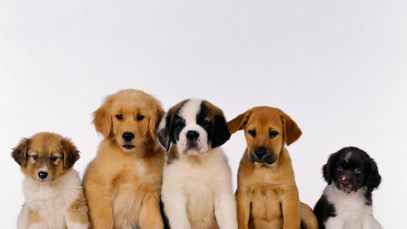 Perros 1366x768 fondos de pantalla y wallpapers for Fondos de pantalla de perritos