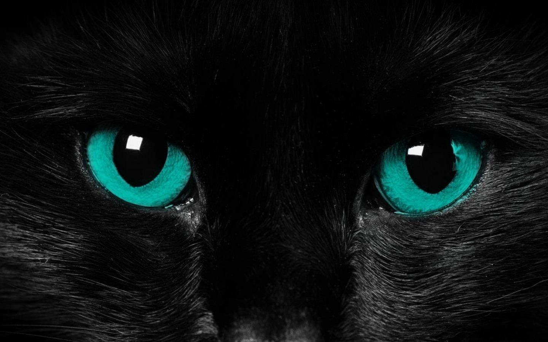 Gato negro 1440x900 fondos de pantalla y wallpapers for Fondos de escritorio para pc