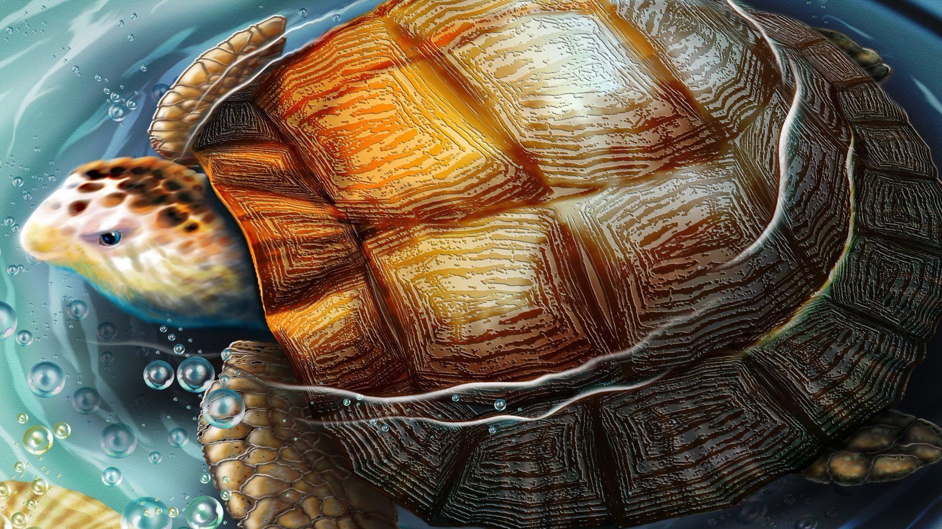 Dibujos De Tortugas 1920x1080 Fondos De Pantalla Y Wallpapers