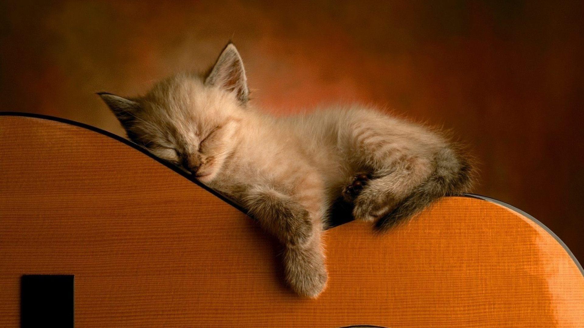 Resultado de imagen para animales tiernos durmiendo