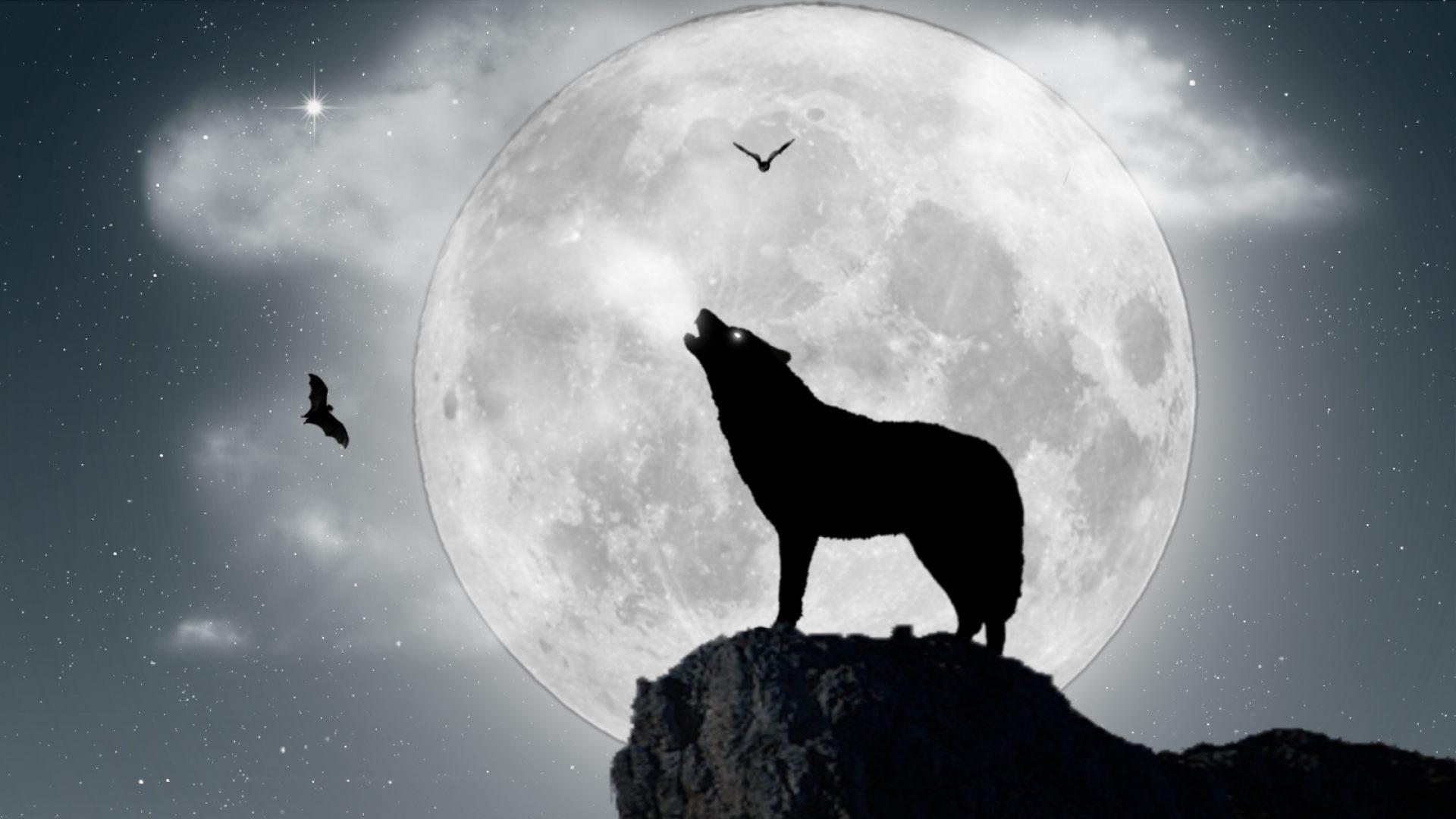 Lobo aullando a la luna llena - 1920x1080 :: Fondos de pantalla y ...