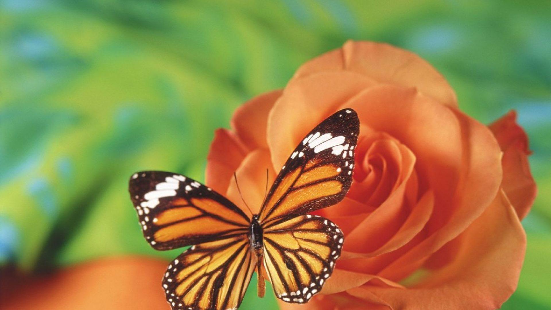 Fondo De Pantalla De Mariposas En Las Flores A 1440x900
