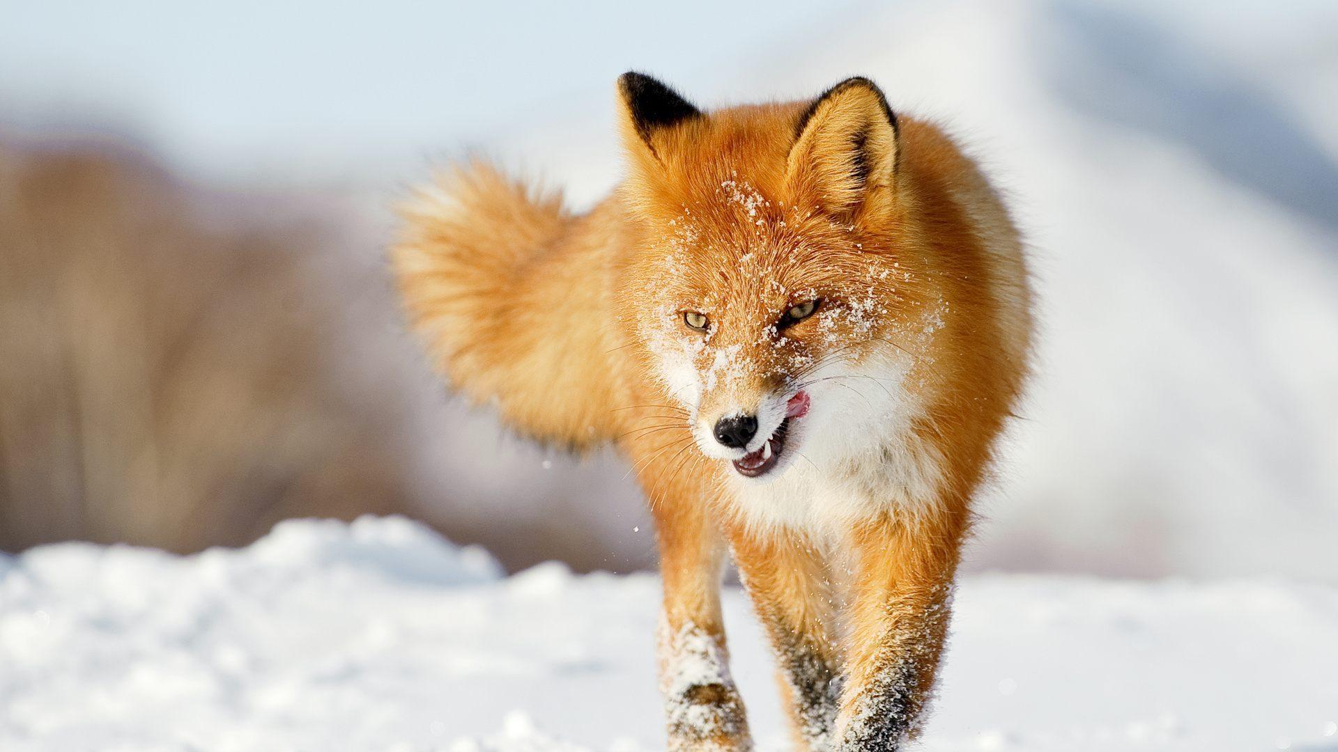 10 Top Cute Wild Animal Wallpaper Full Hd 1080p For Pc: 1920x1080 :: Fondos De Pantalla Y