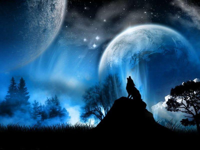 dibujo 3d de lobos