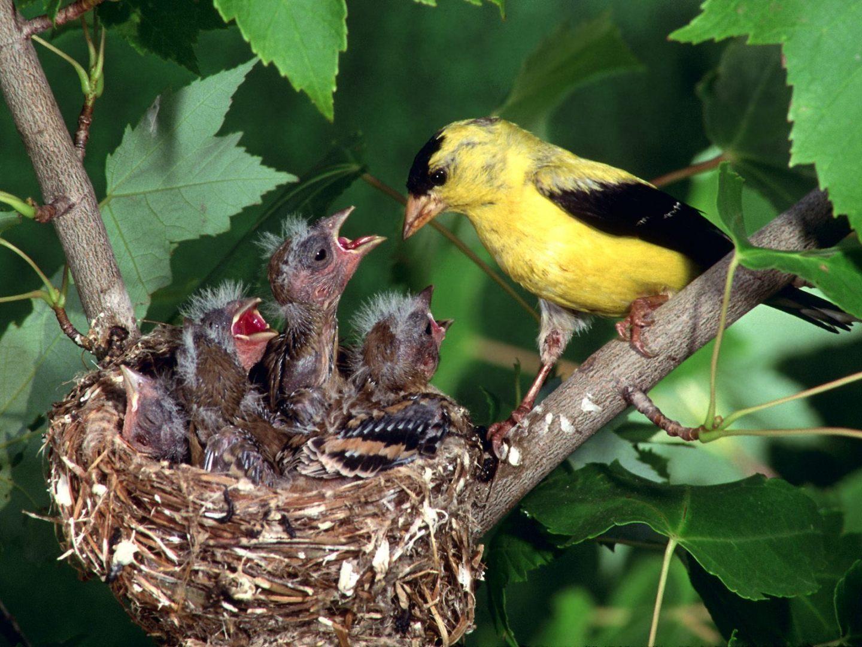Aves en el nido :: Imágenes y fotos