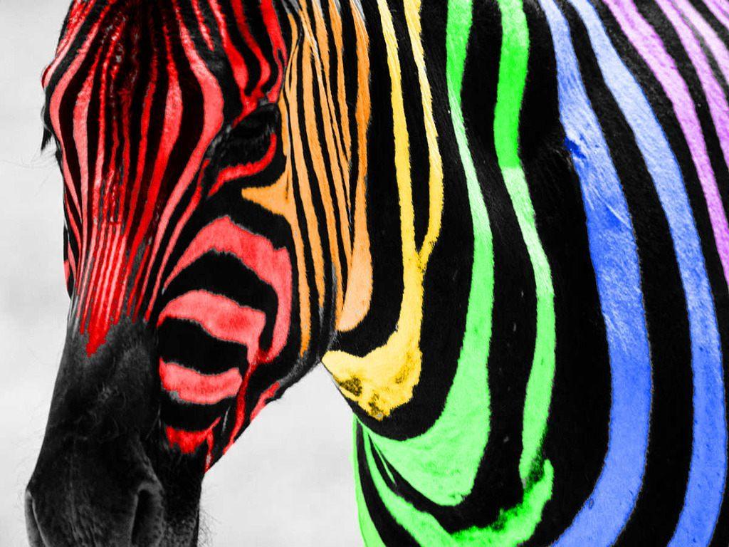 Cebra de colores :: Imágenes y fotos