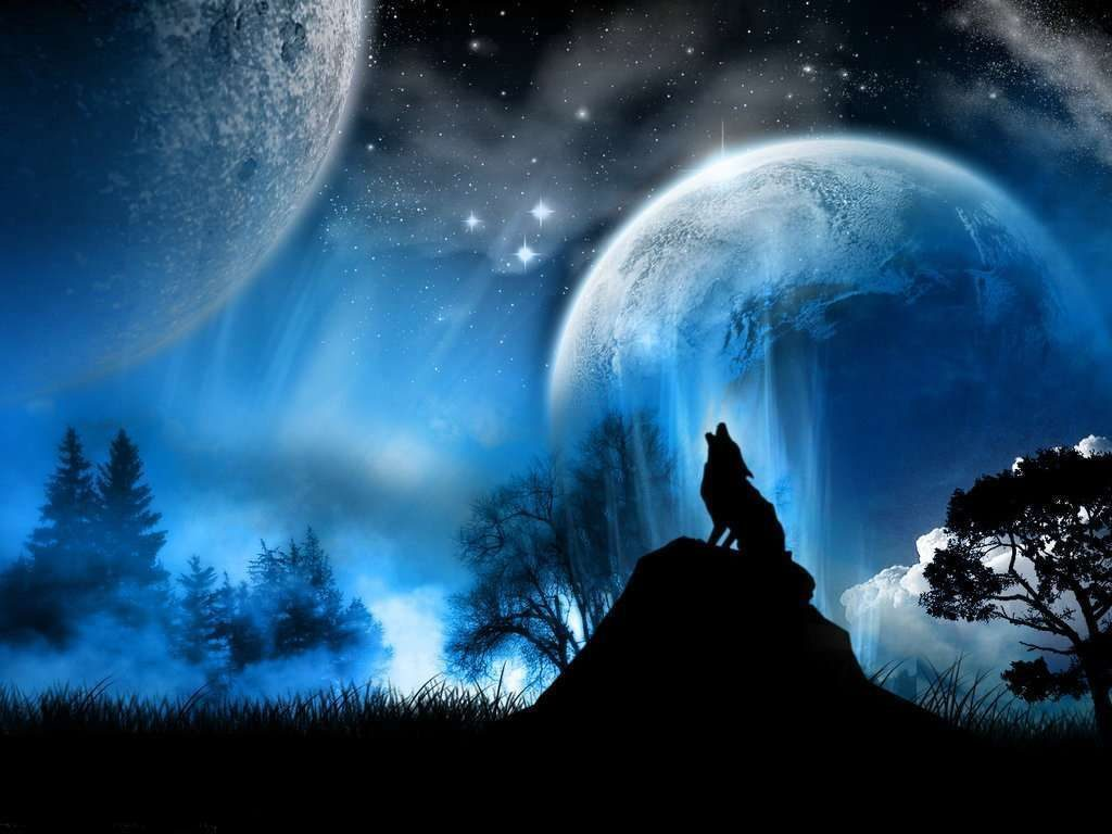 Imagen De Dibujo 3d De Gato Para Fondo De Pantalla: Galería De Imágenes: Fondos De Pantalla De Lobos
