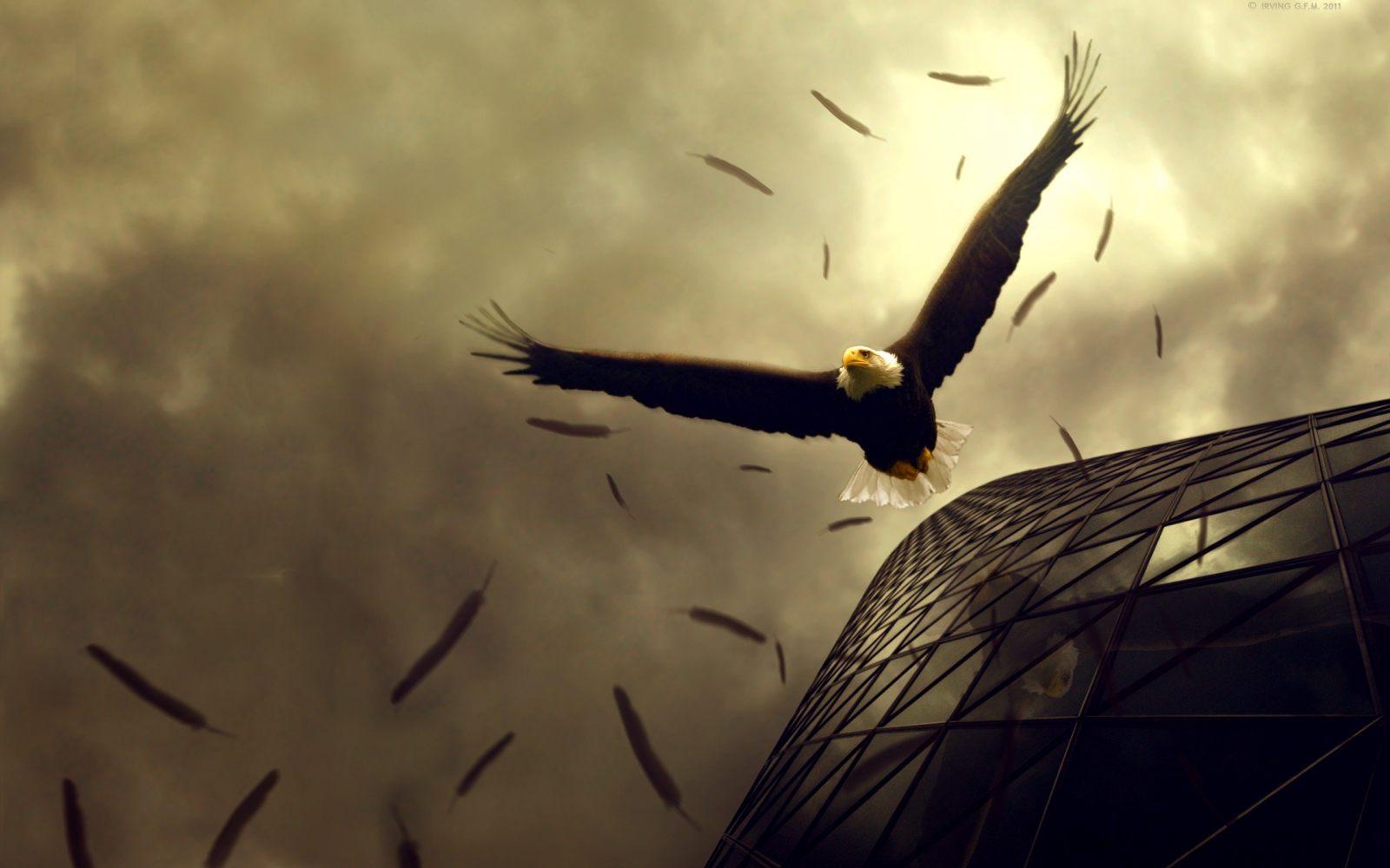 Hd Wallpapers That Will Take You To World Of Fantasy: Dibujo De Un águila :: Imágenes Y Fotos