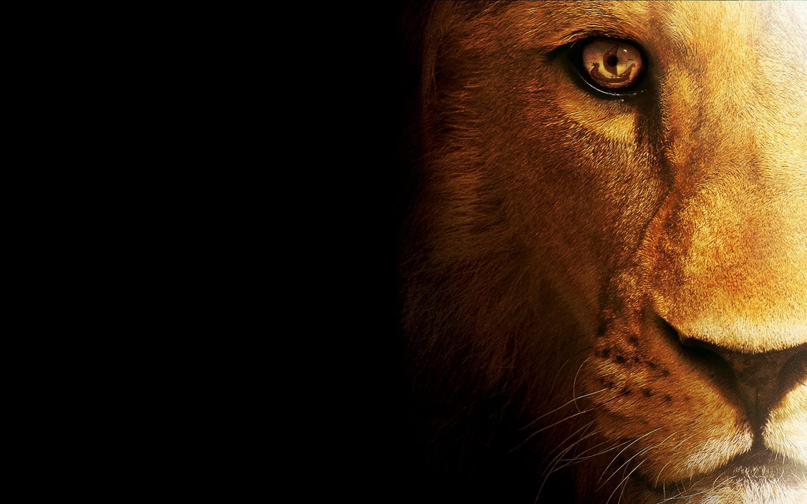 Resoluciones disponiblesRoaring Lion Hd Wallpapers 1920x1080