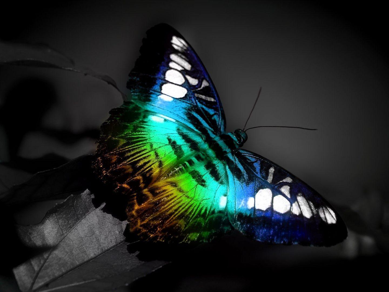 Mariposa de colores fluorescentes im genes y fotos - Imagenes de mariposas de colores ...