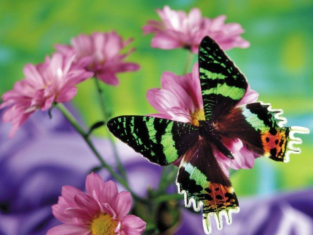 Mariposa de colores im genes y fotos - Imagenes de mariposas de colores ...