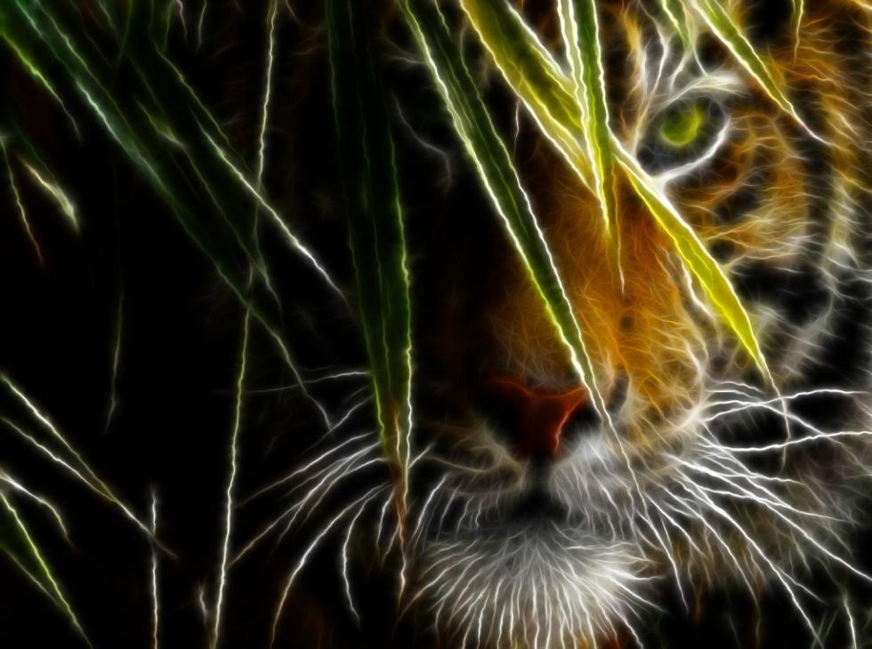 Fotos De Animales Salvajes Para Fondo De Pantalla: Galería De Imágenes: Fondos De Pantalla De Felinos