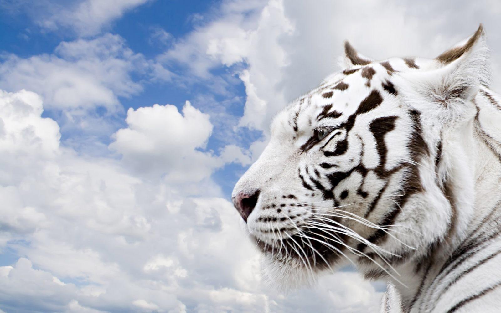 Animales Felino Leopardos Fondo De Pantalla Fondos De: Galería De Imágenes: Fondos De Pantalla De Felinos