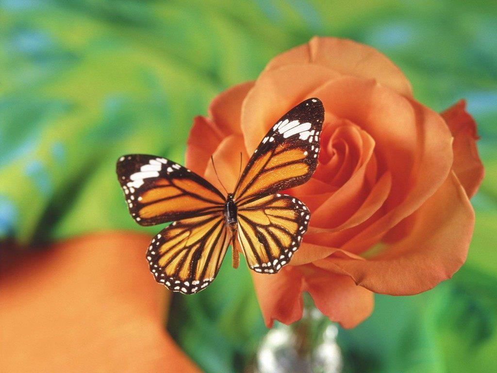 Fondos de pantalla de mariposas