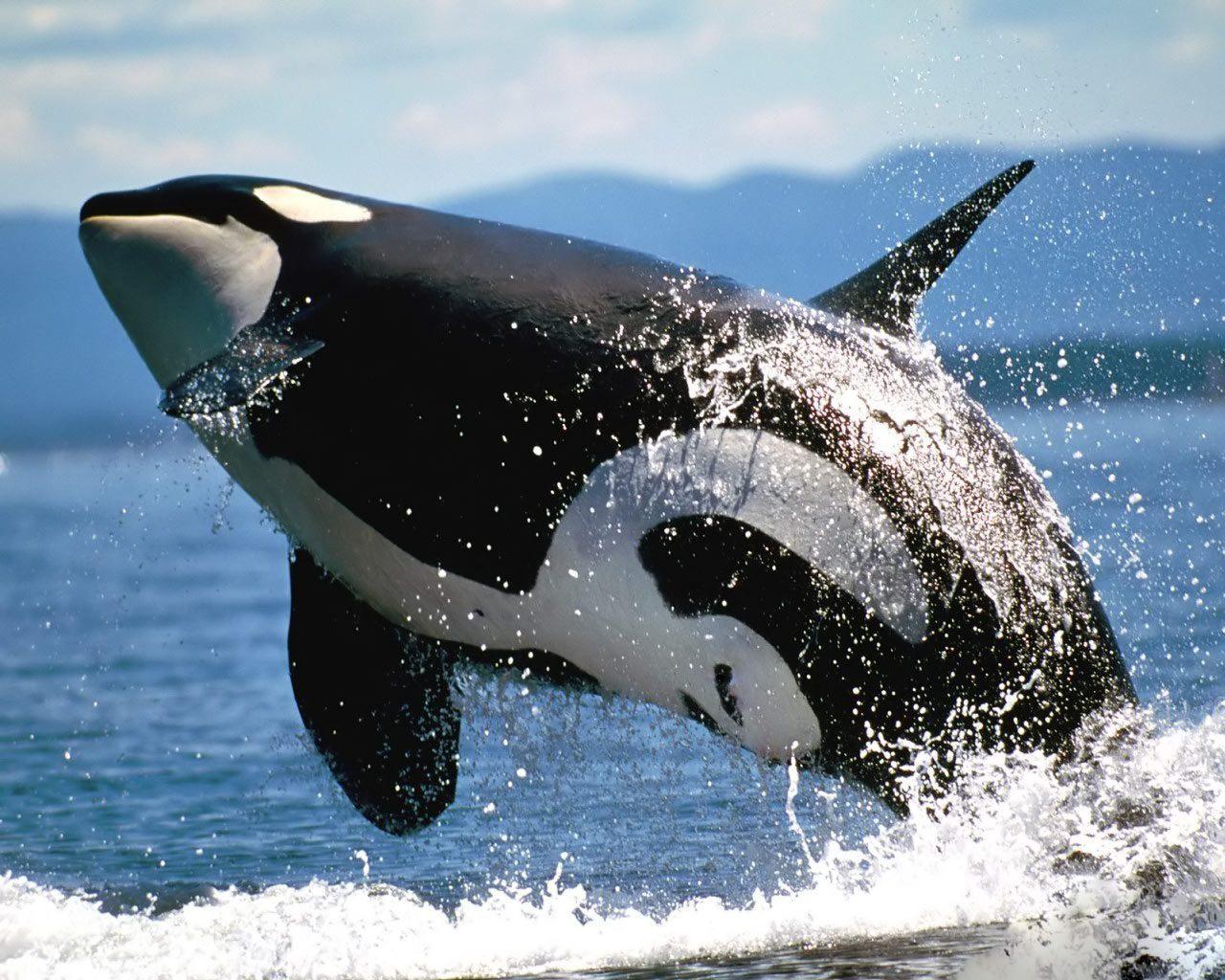 Fondos de pantalla de animales marinos for Ver fondos de escritorio